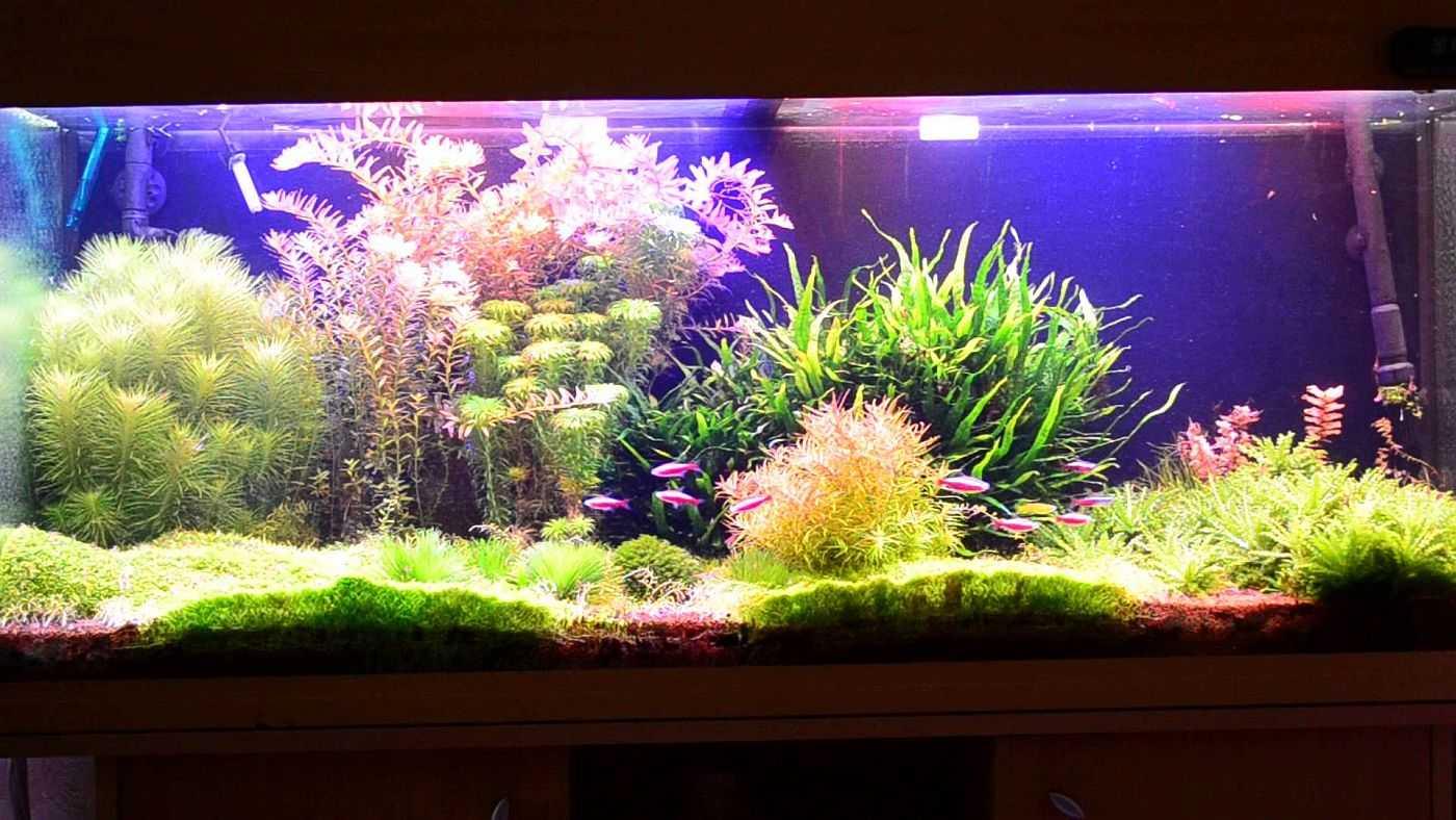 Освещение аквариума своими руками - дело нелегкое, но все можно сделать...