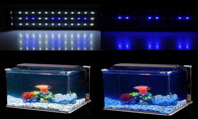 Освещение аквариума при помощи светодиодов