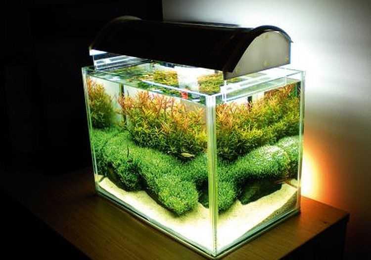 Освещение аквариума у упором на край банки