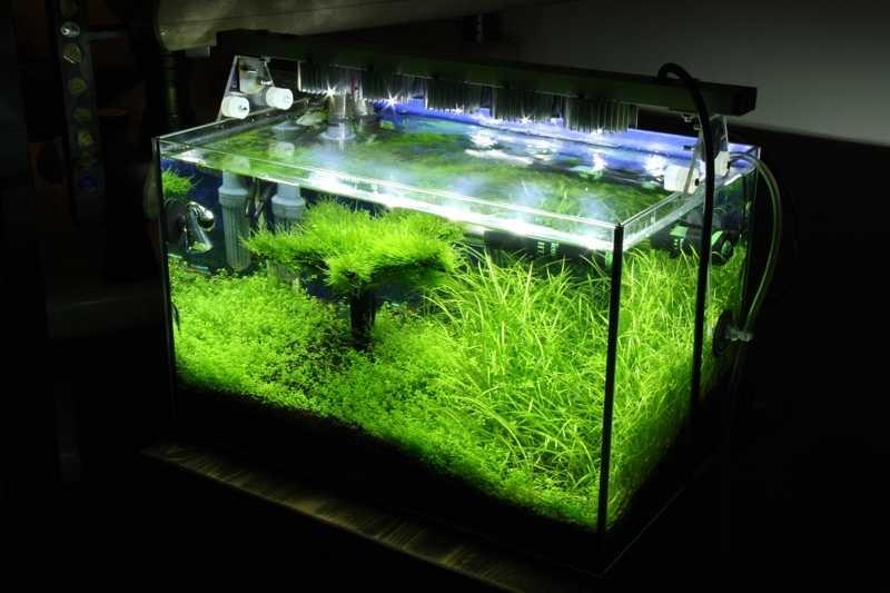 Если лампа одна, ее смещают в сторону наибольшего скопления растений - к задней стенке аквариума