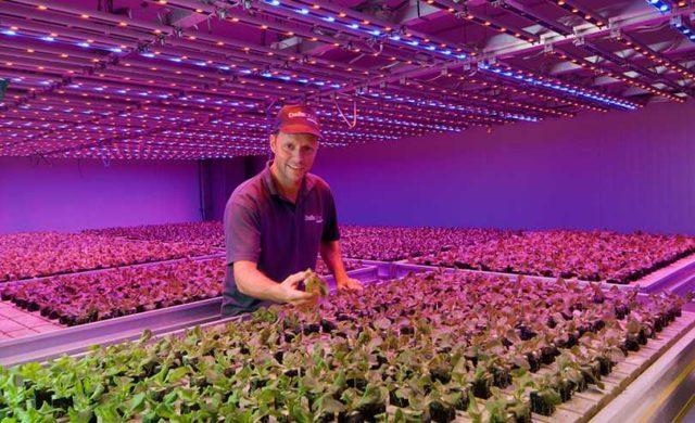Подсветка растений светом определенного диапазона благотворно влияет на их развитие