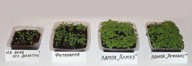 Результаты роста растений с различными видами подсветки (фото)